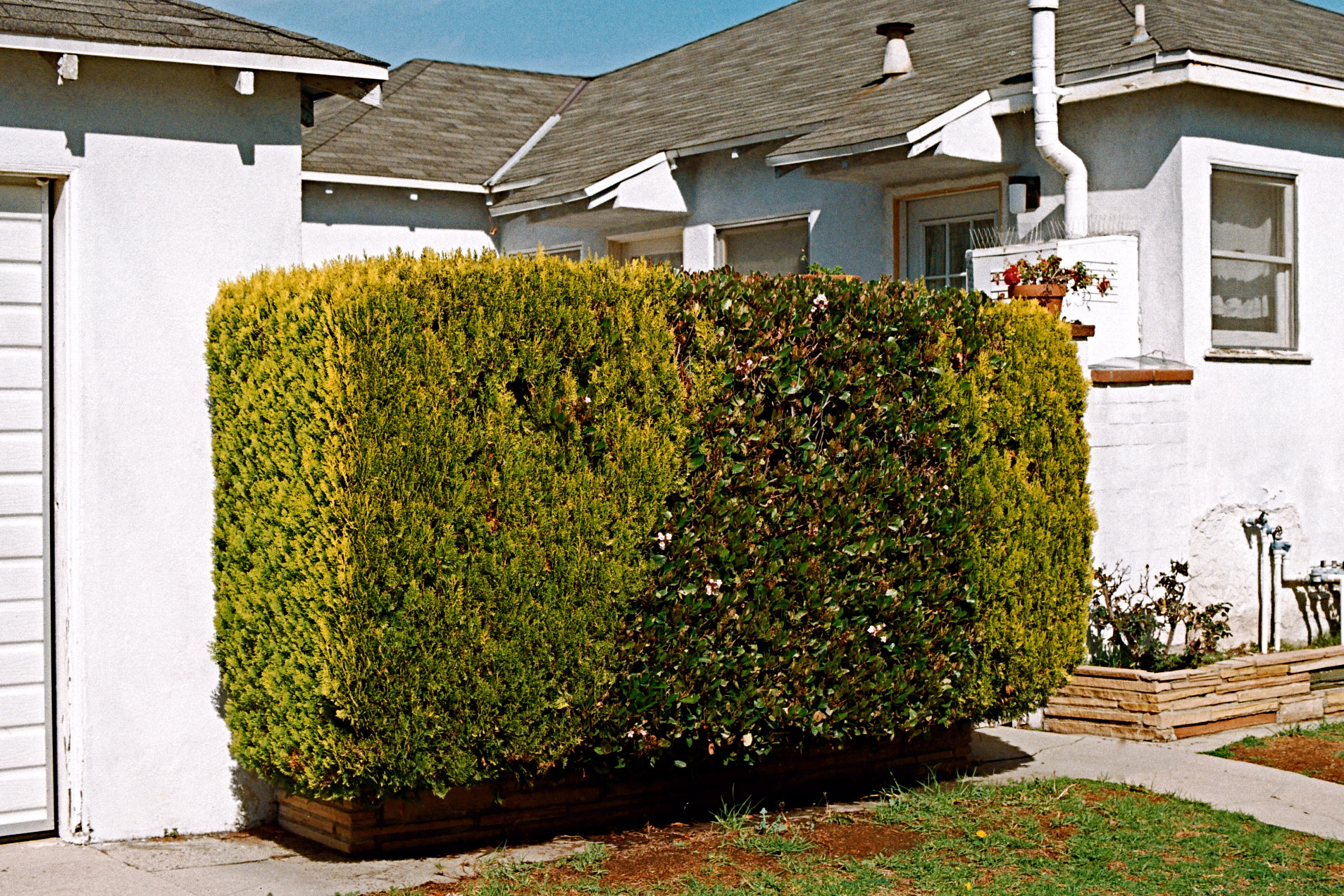 Blending Bushes | L.A. CA | 2009