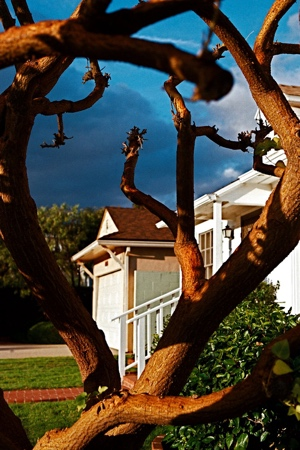 Tree with dark Clouds | Pacific Palisades CA | 2009